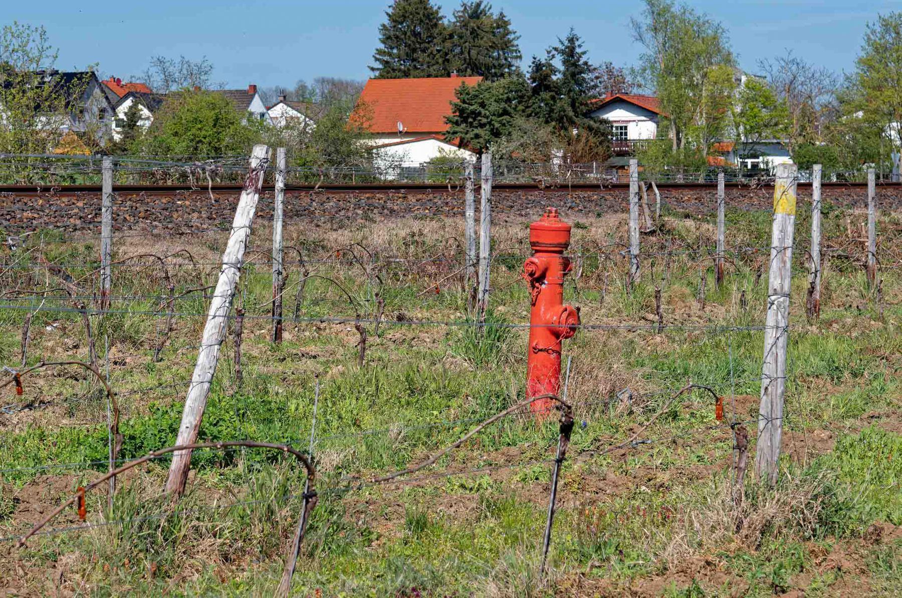 Im-Kampf-gegen-den-Weinbrand-