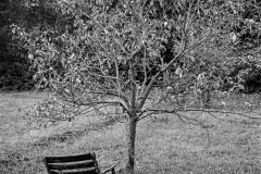 Warten-auf-den-Herbst